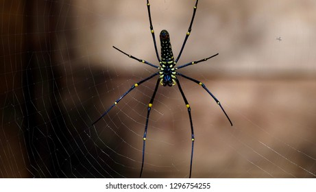 Close up picture of Spider on web in the forest - Shutterstock ID 1296754255