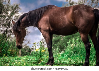 Close up picture of standing beauty horse.