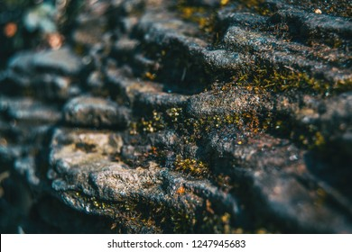 A close up picture of a stratum stone with some moss