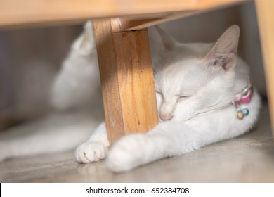 Close up picture of a white cat lying on the floor.