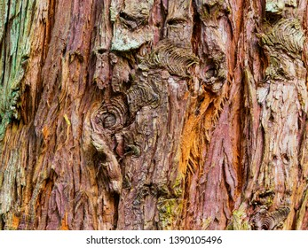 Close up of a piece of colourful peeling Douglas Fir bark with knots and splits