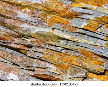 Close up of a piece of cracked Welsh slate covered with golden coloured lichen