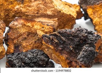 Close up of pieces of chaga mushroom.
