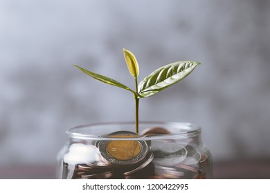 Close up of pile of coins with plant in glass jar. business and finance concept
