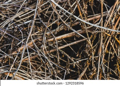 Close up pile of dry wooden twigs in random order