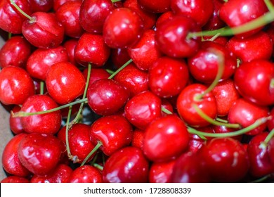 Close up of pile of ripe cherries with stalks. Ripe cherries background.