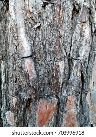 Close up of Pine Tree bark texture.