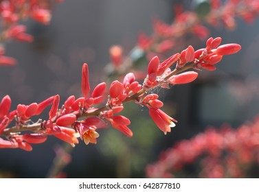Close up pink flower in Arizona