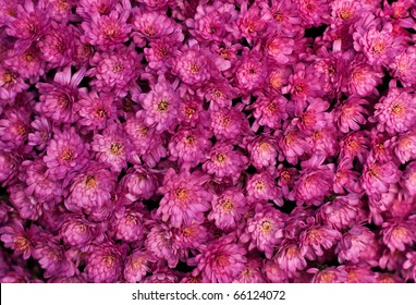 Close up of pink flower background