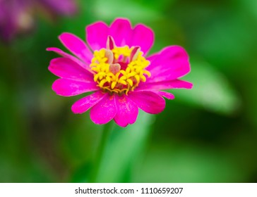 Close up of Pink flower blooming in the green nature backgrounds