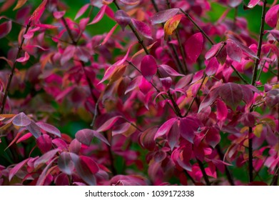 close up of pink foliage in a garden