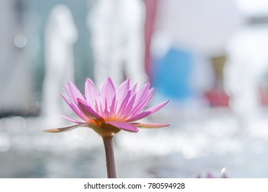 Close up Pink lotus flower at the fountain behind the fountain.