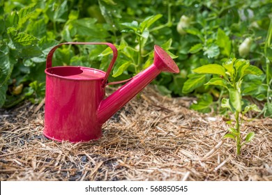 Close up of pink watering can in vegetable garden