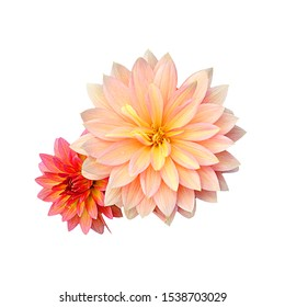 A close up of pink and yellow flowers, cut in the white background.