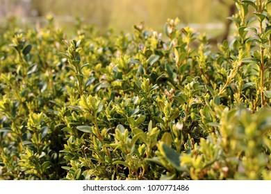 close up plant