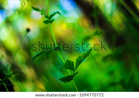 Close up of plant in the forest