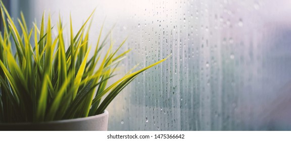 Close up of plant pot near window with raindrop, raining day background, copy space and banner style template for text