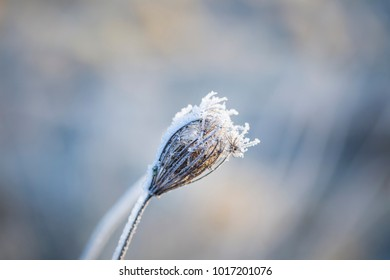 Close up of plants with frost. Natural macro background.