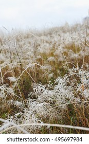 Close up of plants and grass covered by the first rime.