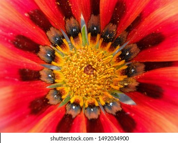 Close up polen of red flower
