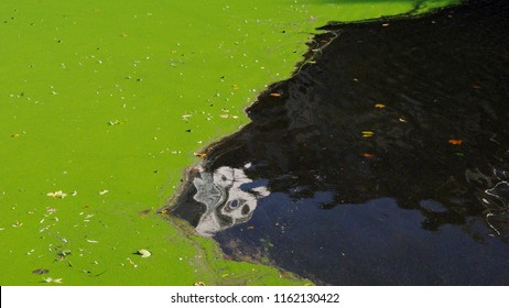 Close up of a polluted pond showing eutrophication.  Green algae are populated with rubbish and cigarette butts, the black water show reflections of buildings and a white abstract face.