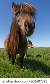 close up of pony on meadow