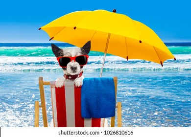 close up of  poodle  dog resting and relaxing on a hammock or beach chair under umbrella at the beach ocean shore, on summer vacation holidays