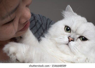 Close up portrait of Asian girl hugging cute white Persian Chinchilla cat