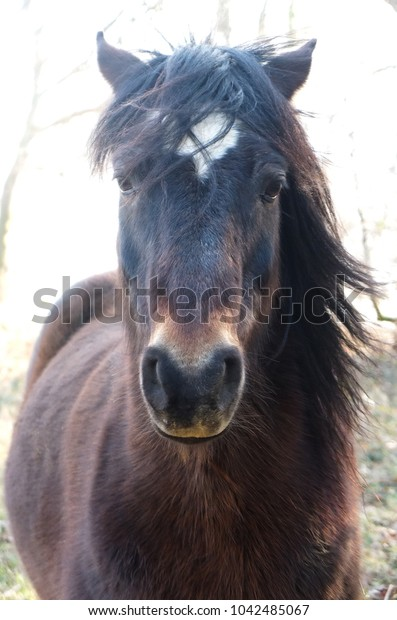 Close up portrait of a brown horse with a white star and black mane blowing in the wind in the South of France, Ariege, Pyrenees
