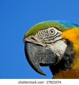 close up portrait of a colorful macaw parrot