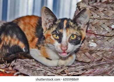 Close up of portrait cute cat