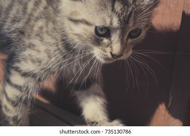 Close up portrait of a cute striped, tabby kitten, filtered.