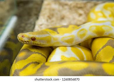 Pet Snake Images Stock Photos Vectors Shutterstock