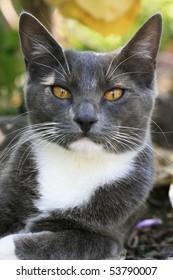 A close up portrait of a domestic cat.