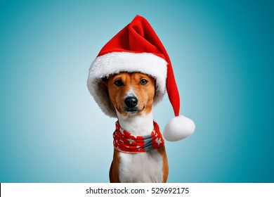 6ef2c97f2f0c5 Close up portrait of funny beautiful dog wearing christmas santa hat and  red festive collar with