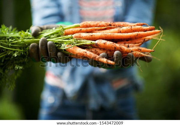 Close up portrait gardener with bunch of carrots in hand outdoors