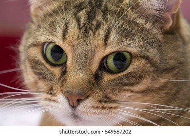 Close up portrait of green-eyed funny cat