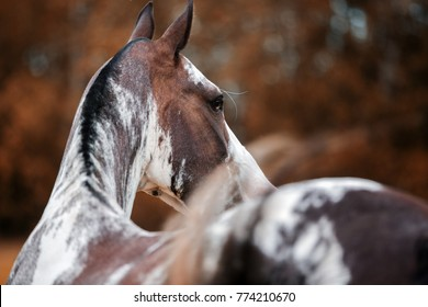 close up portrait of horse back in autumn