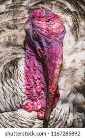 Close up portrait of male turkey with bright pink caruncles and snood