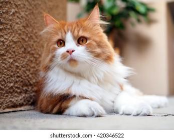 Imágenes, fotos de stock y vectores sobre Pussy Cat Dolls   Shutterstock