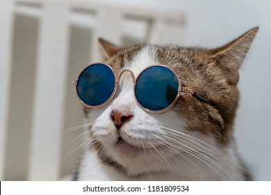 Close up portrait photo of short hair cat wearing sunglasses and sitting on a white chair.