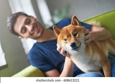 Close up portrait of Shiba Inu dog face, sitting on green sofa with owner. Best friend concept. Young caucasian male in casual t-shirt playing with his cute pet on couch at home, stroking and petting
