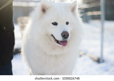 Northern Dog Images, Stock Photos & Vectors | Shutterstock