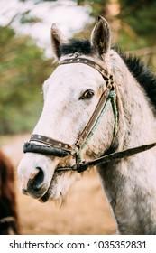 Close Up Portrait Of White Horse.