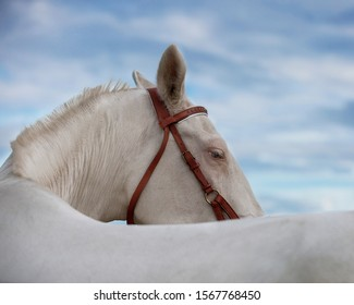 close up portrait of white horse on blue sky with clouds background