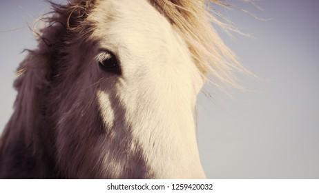 Close up portrait of white horse. Vintage matte effect