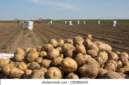 Close up of potatoes in sack in field in front of tractor and machinery working in background