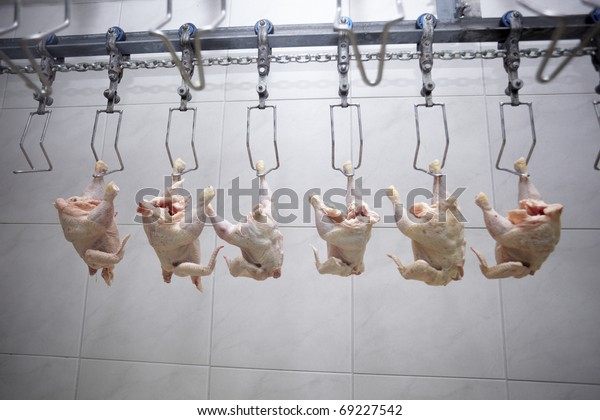 close up of poultry processing in food industry