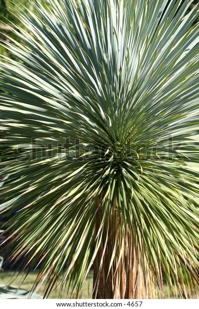 close up of prickly cactus