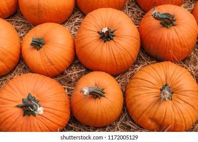 Close up of pumpkins